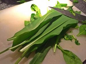 fermenteret spinat
