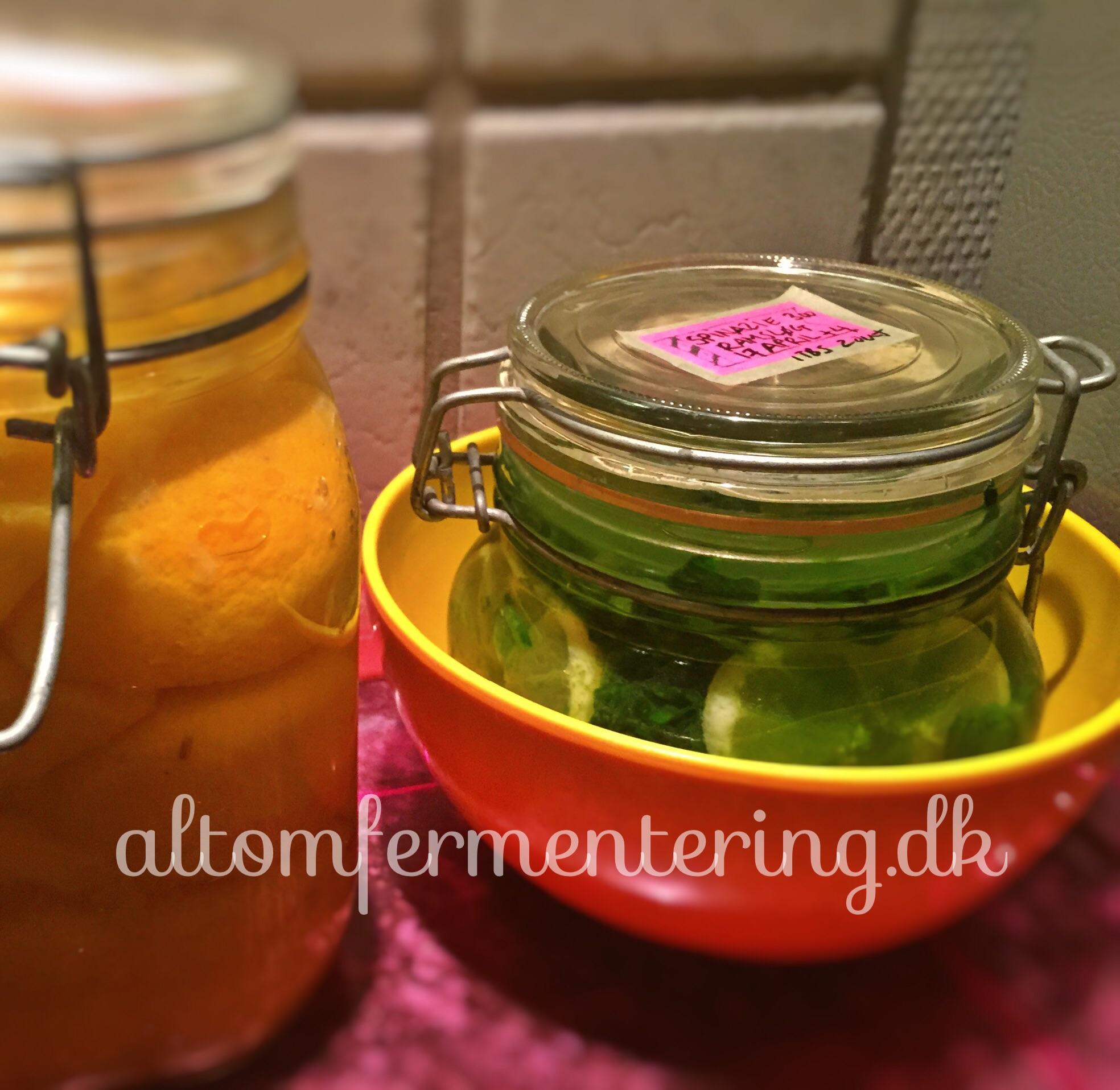 Fermenteret Spinat og Ramsløg