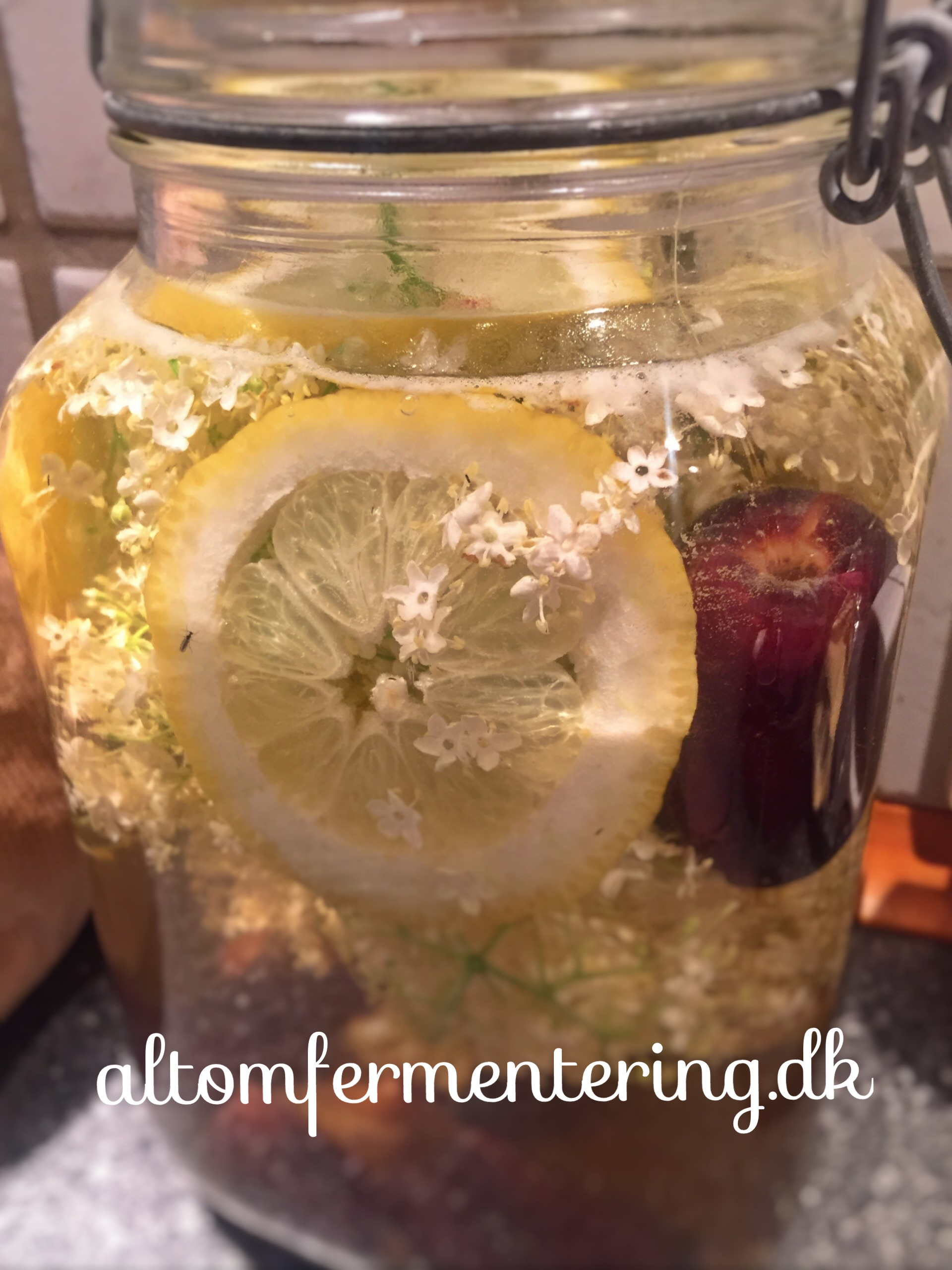 Fermenteret Hyldeblomst Drik